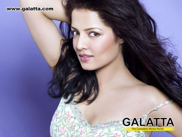 Celina Jaitly Actress Wiki